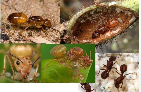 5-ants-queens