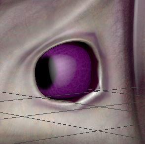 6 4  in maya eye thing TAG 9%.jpg