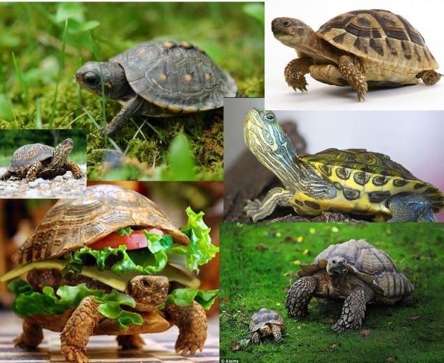 5 turtle